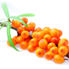 Sea buckthorn on a white background