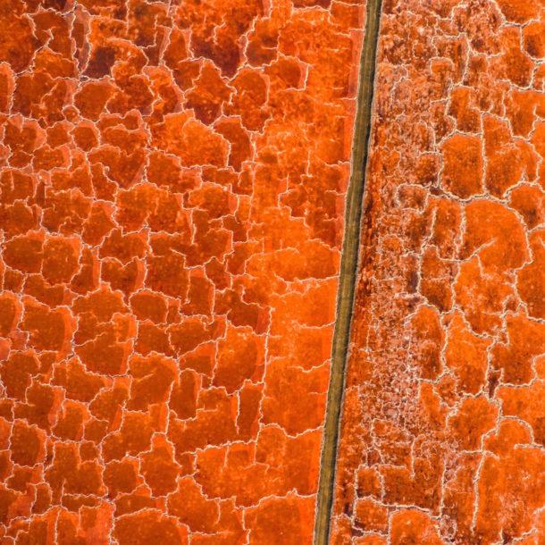 baobab-elements-a-cidade-na-ponta-dos-dedos-de-sancha-trindade9